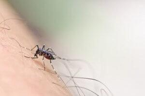insectensteek
